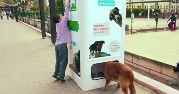 Máquina troca garrafas plásticas por ração para cães abandonados