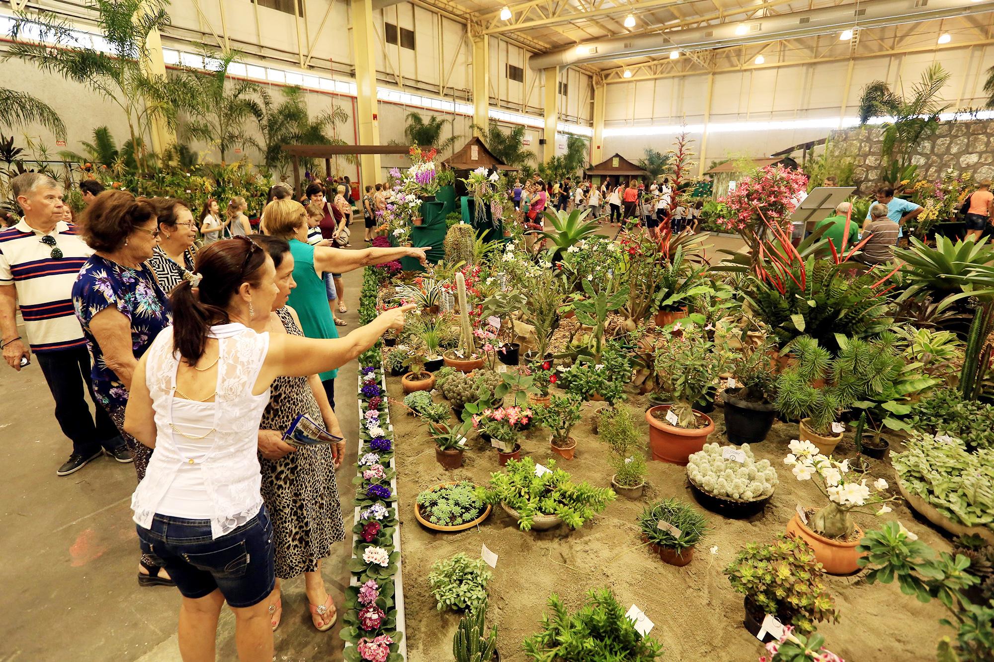 77a. Festa das Flores começa na próxima terça-feira (17) em Joinville (SC), confira a programação