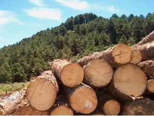PalavraLivre-produtos-florestais-sc-silvicultura