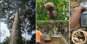 PalavraLivre-sc-silvicultura-estatistica-area-florestal