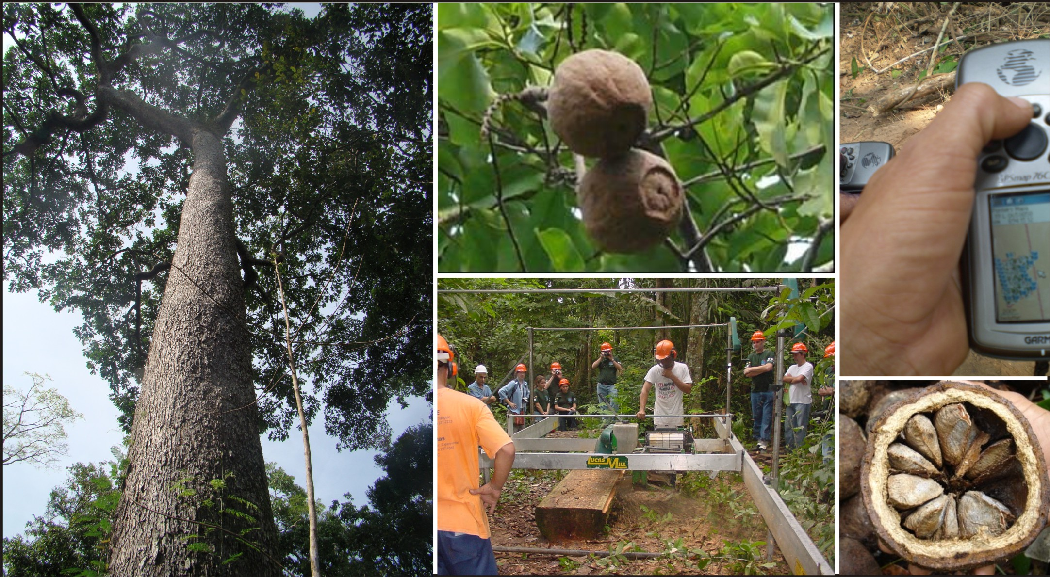 Associação Florestal lança segunda edição de anuário estatístico