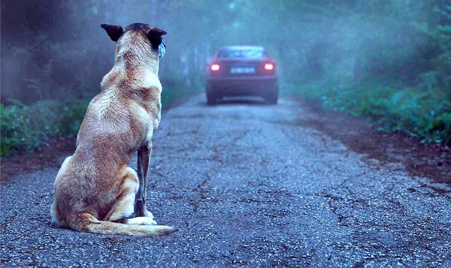 Senado aprova aumento de pena para quem maltratar cães e gatos