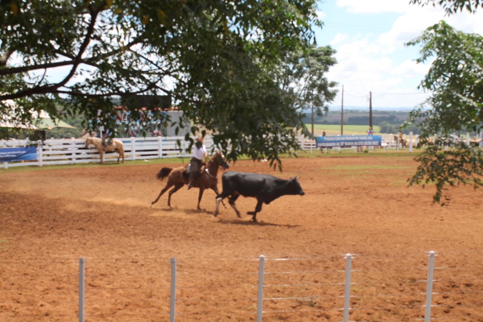 Rodeio Crioulo Nacional inicia na próxima sexta-feira (19/4) em Joinville (SC)