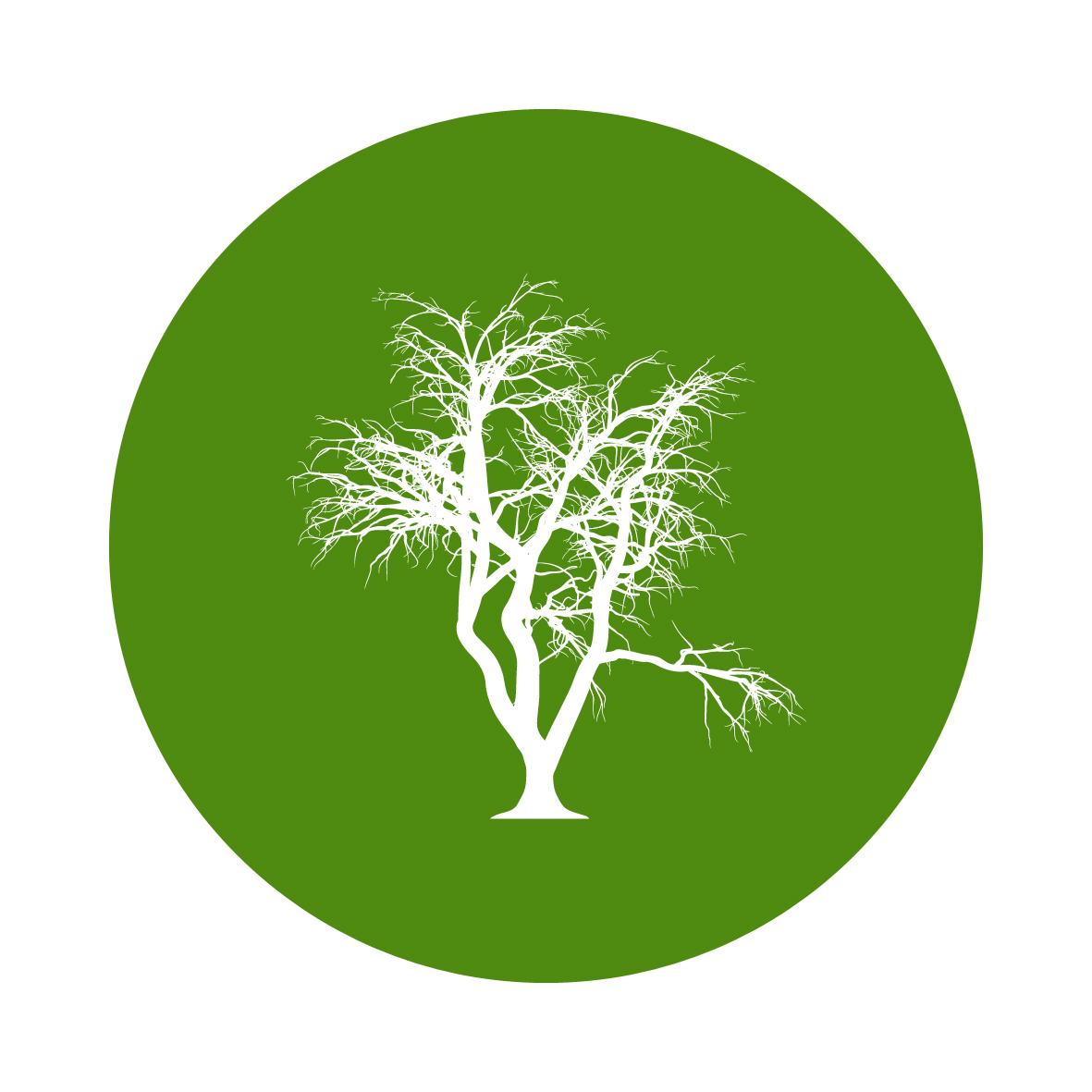 Meio Ambiente: SC recebe três seminários que tratam do tema