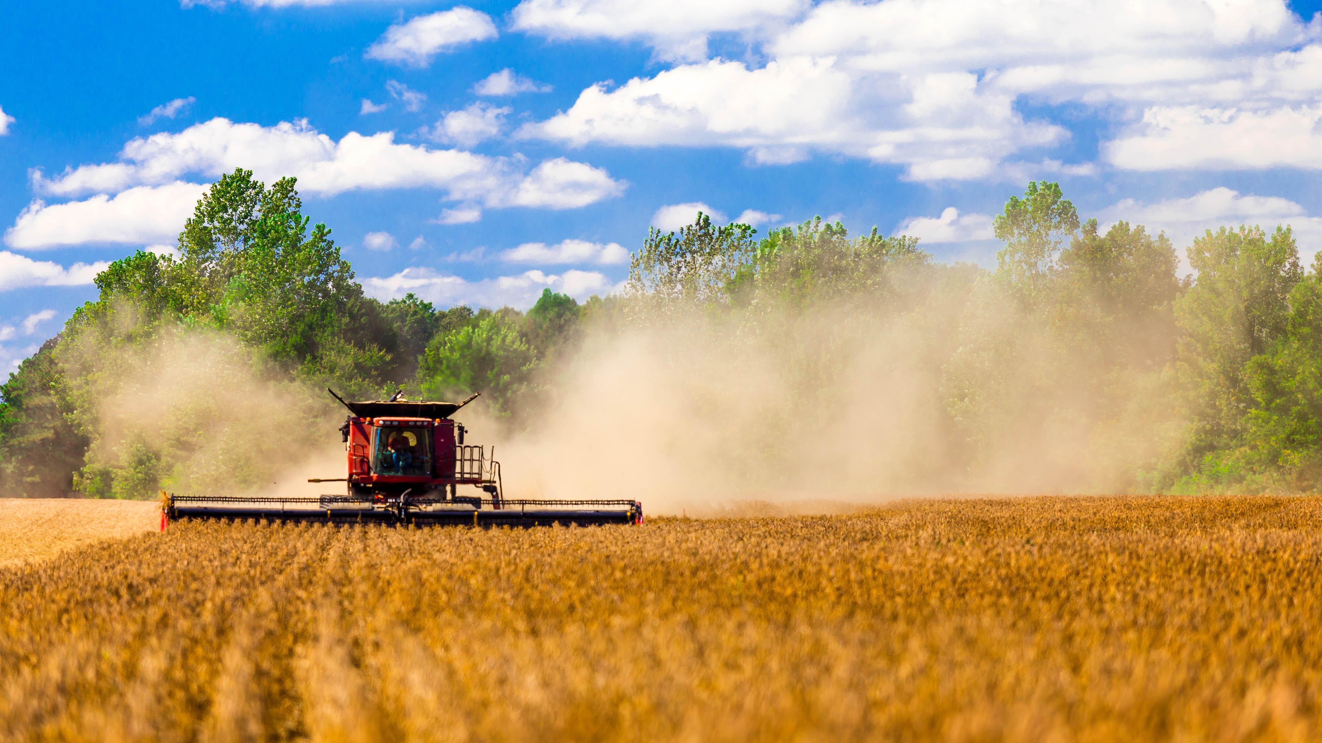 Safra de grãos de 2015 deverá ser 8,1% maior do que no ano anterior, diz IBGE