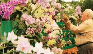 palavralivre-flores