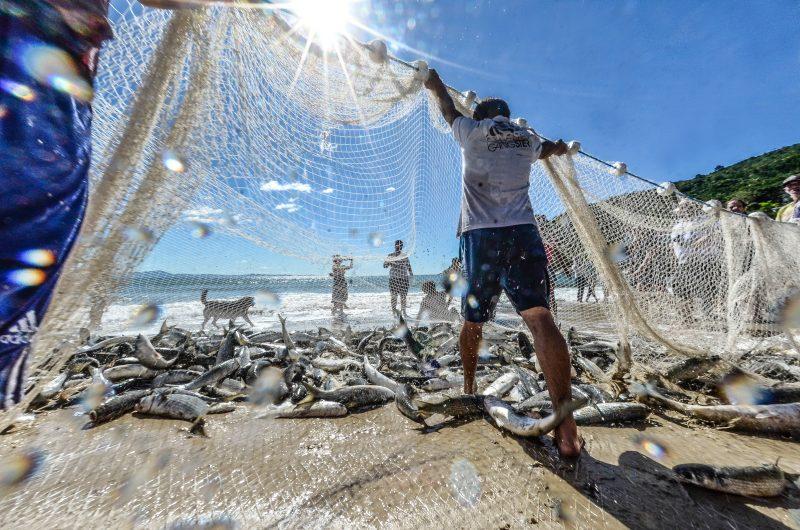 Pescadores e maricultores terão linha de crédito em SC